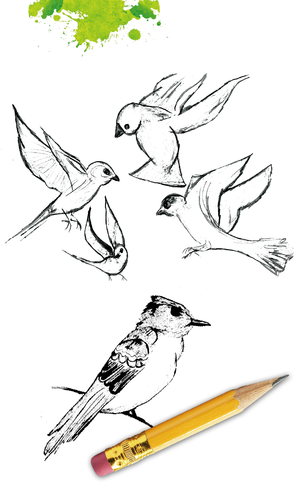 Bird Sketches By Zohra Lakhani | Creative Joys